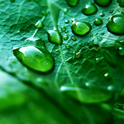 water_on_leaf.jpg