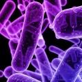 Rafforzata la teoria del microbiota come causa della malattia di Parkinson