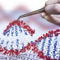 Perchè non tutti i portatori di mutazioni del gene GBA si ammalano?
