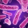 Microbiota interferisce con la levodopa