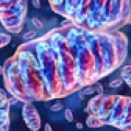 Cellule staminali difettose nella PSP