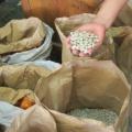 Un legume altrettanto efficace quanto i farmaci  nella malattia di Parkinson