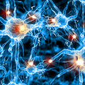 Deficit di neuroni serotoninergici e malattia di Parkinson