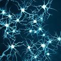 In sviluppo fattore di crescita dopaminergico
